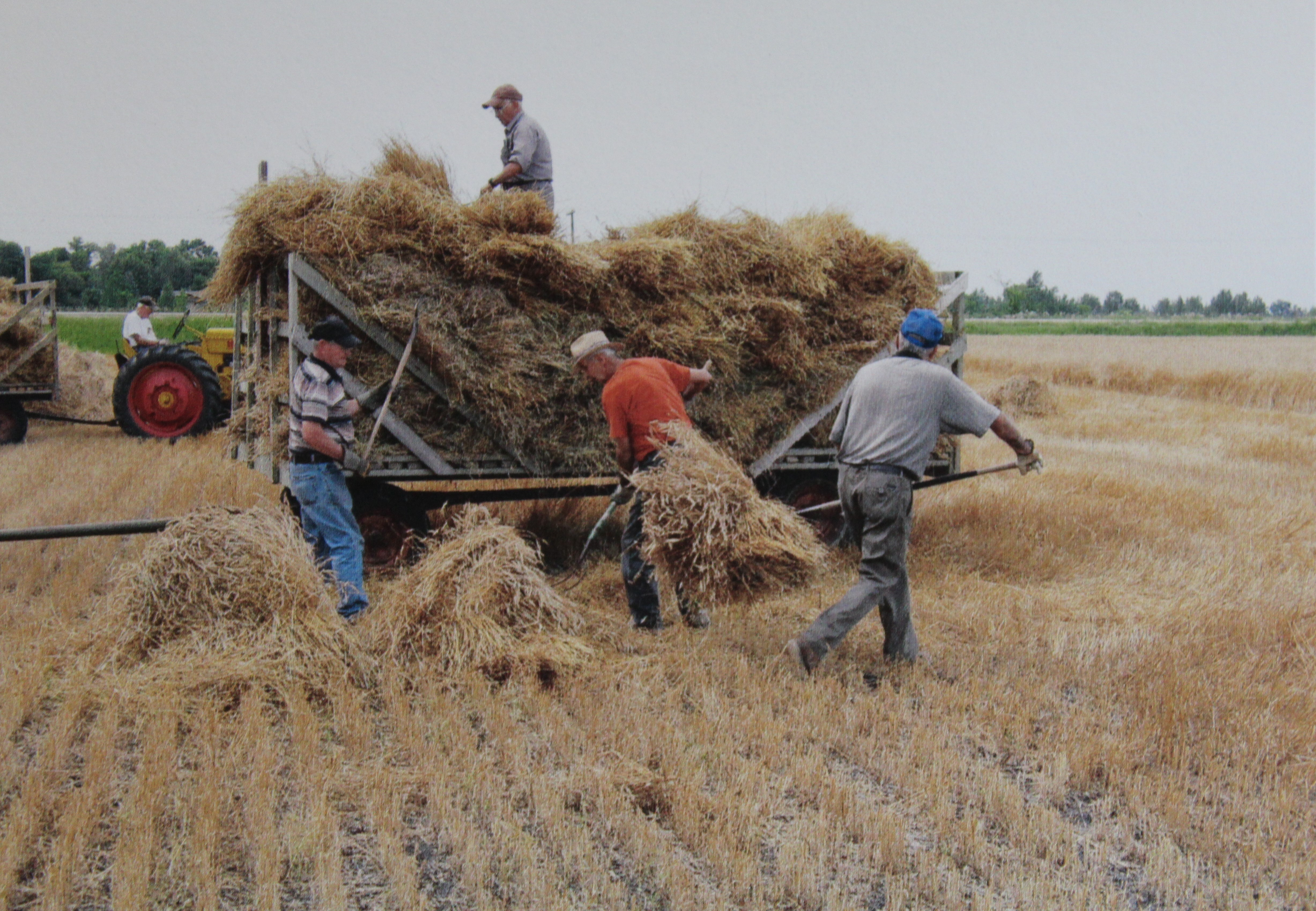 Picture of threshing demonstration